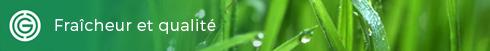 Fraîcheur et qualité de la pelouse en plaque