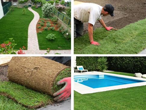pelouse et gazon en plaque